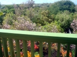 Treetop View from Cottage