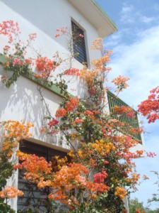 Country Cottage Anguilla